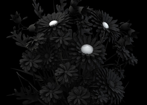 2014 eternal flowers the black set 2 002 tty art 300x214 - Virtual Photography