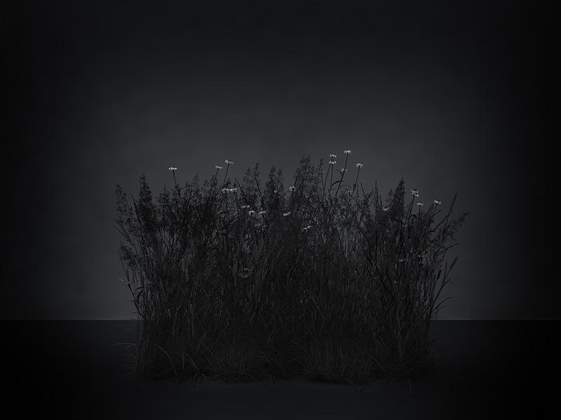 2016 virtual nature meadows the black set 001 tty art - 2016 - Virtual Nature - Meadows - The Black Set