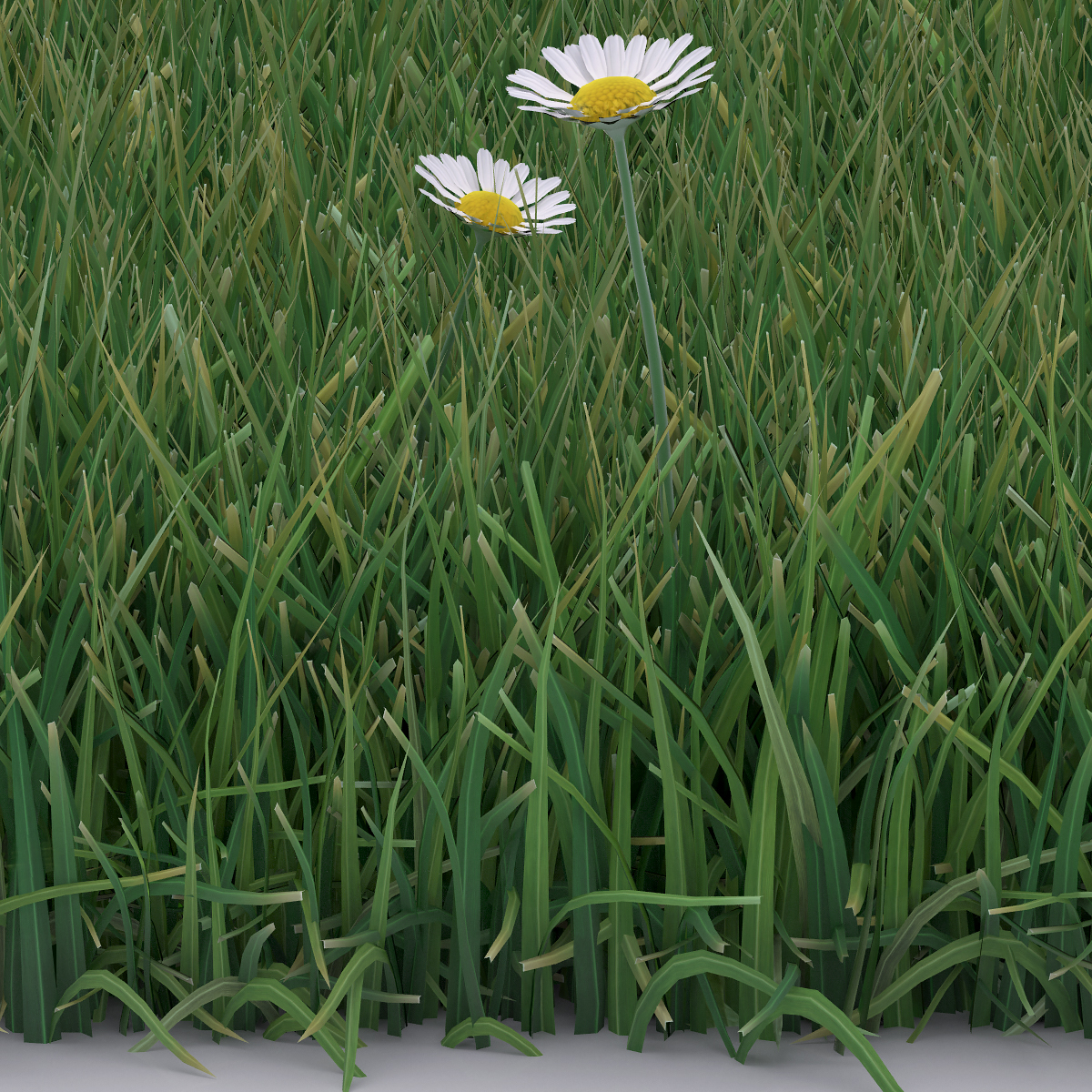 Detail Virtual Flowers and Grass 001 - 2018 - Virtual Flowers and Grass