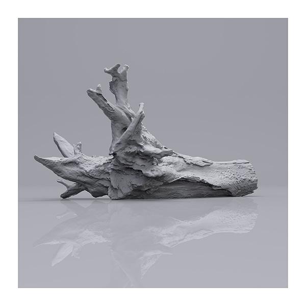 Still LifeN6 001 - 2019 - Still Life. N°6. (Wood Branchs)