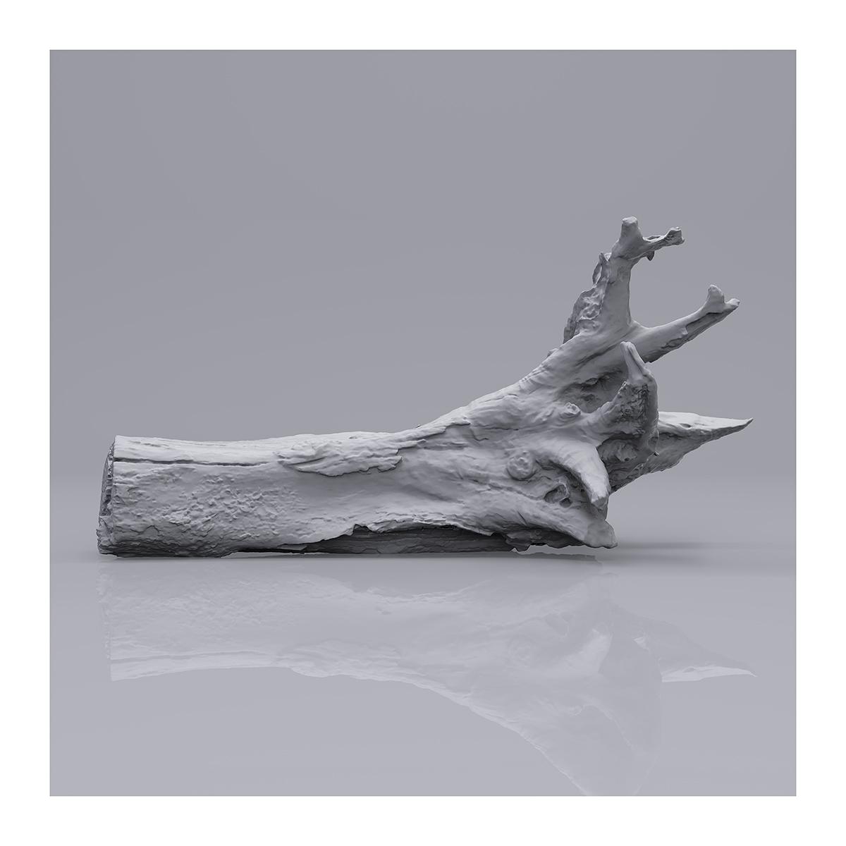 Still LifeN6 002 1 - 2019 - Still Life. N°6. (Wood Branchs)