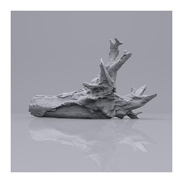 Still LifeN6 003 - 2019 - Still Life. N°6. (Wood Branchs)