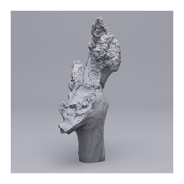 Still LifeN6 008 - 2019 - Still Life. N°6. (Wood Branchs)