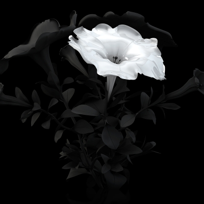 B Eternal Flowers The Black Set 002 400x400 - Visuals. 2014