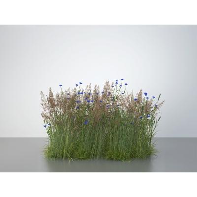 D Virtual Nature Meadows 001 1 400x400 - Visuals. 2016