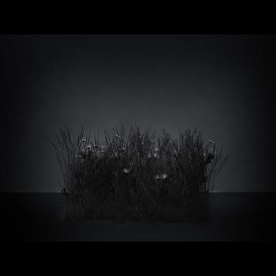 E Virtual Nature Meadows The Black Set 003 1 400x400 - Visuals. 2016