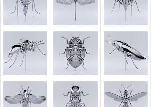 These were the Insects 000 300x214 - Overview