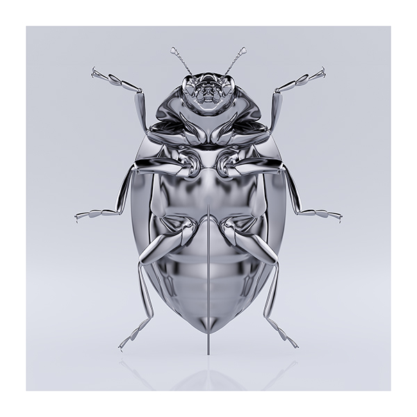 These were the Insects 005 - 2020 - These were the Insects
