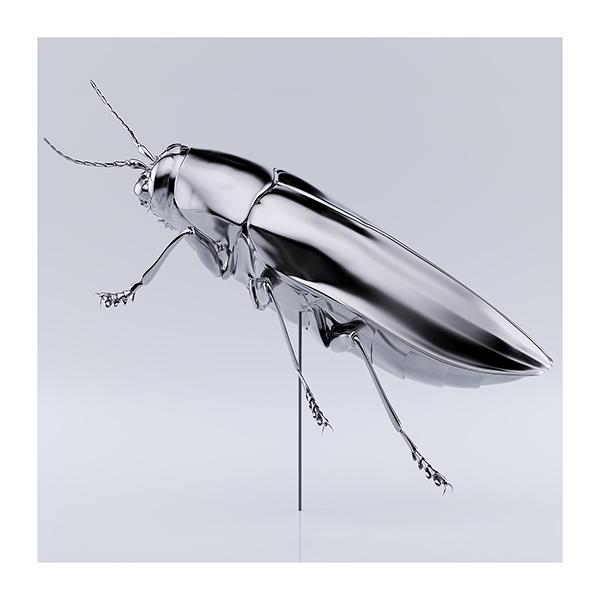 These were the Insects 006 - 2020 - These were the Insects