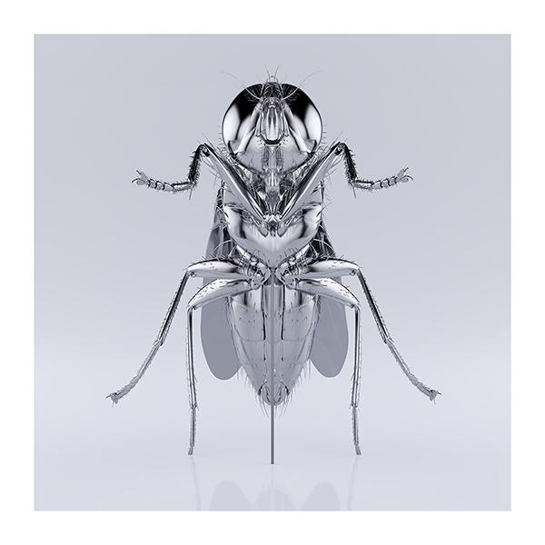 These were the Insects 008 - 2020 - These were the Insects