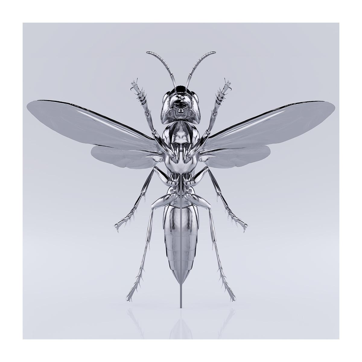 These were the Insects 009 1 - 2020 - These were the Insects