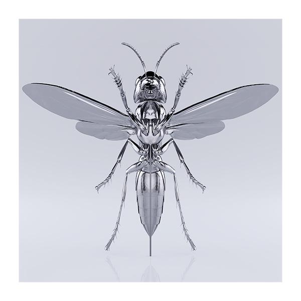 These were the Insects 009 - 2020 - These were the Insects