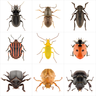 355 These were the Insects II 000 400x400 - Visuals. 2020