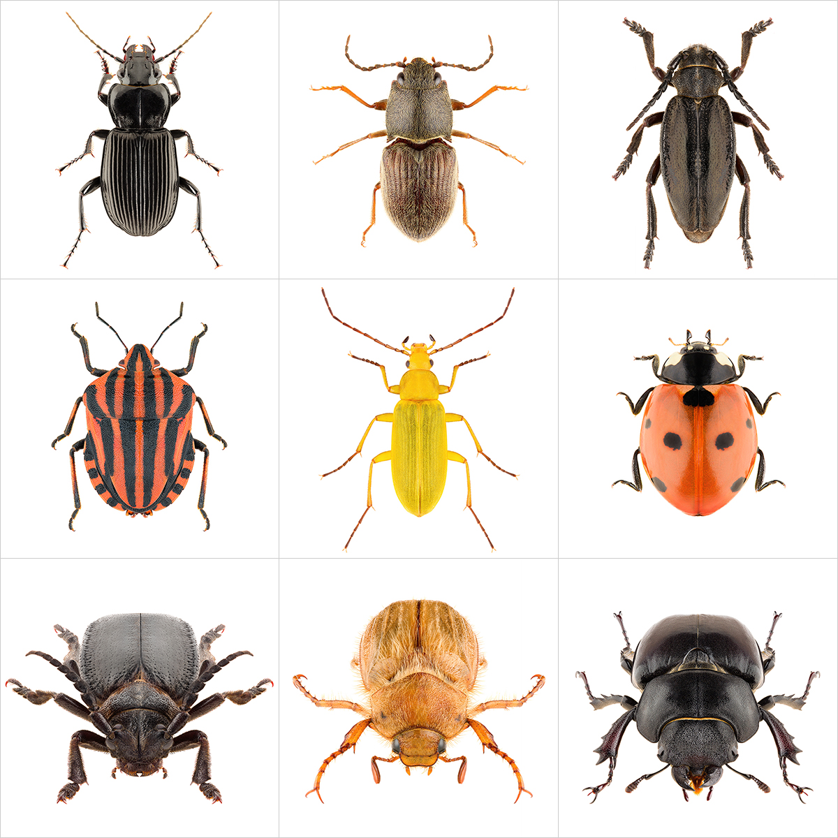 These were the Insects II 000 1 - 2020 - These were the Insects. II