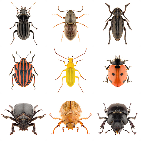 These were the Insects II 000 - 2020 - These were the Insects. II